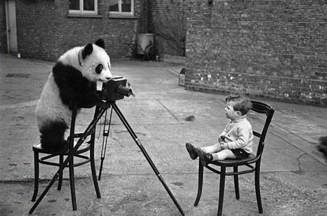 animal-photographe-13