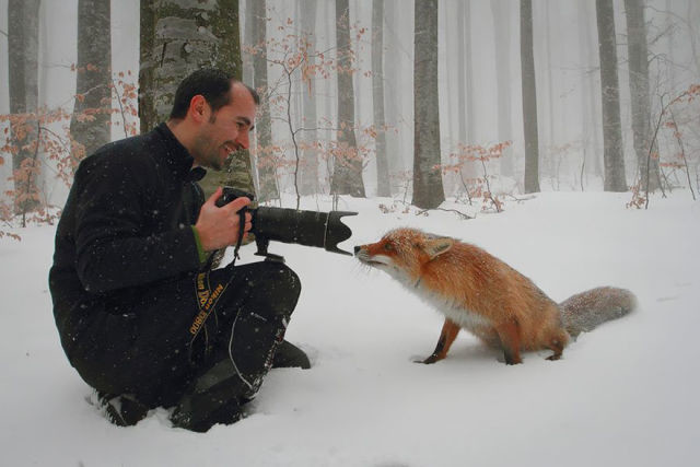 animal-photographe-17