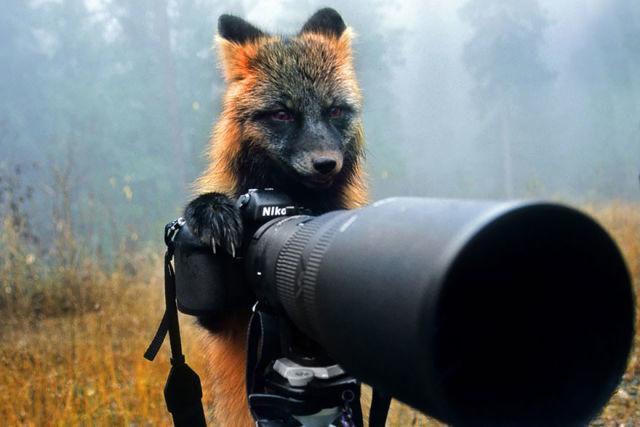 animal-photographe-19