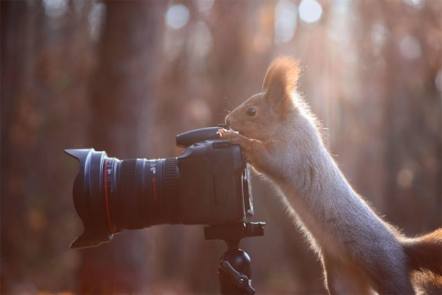 animal-photographe-20