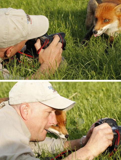 animal-photographe-21