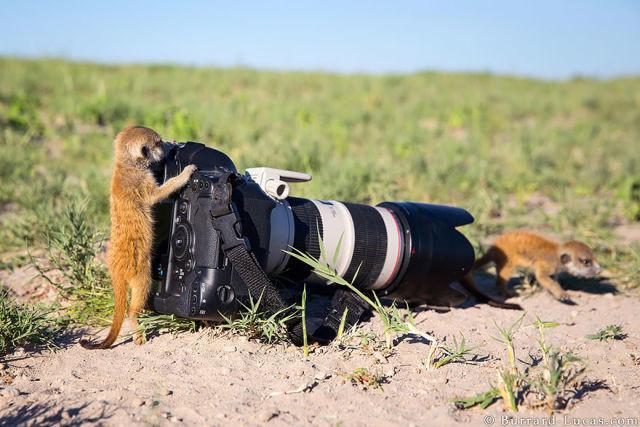 animal-photographe-4