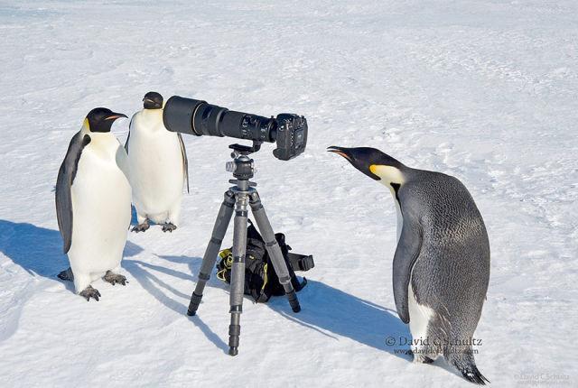 animal-photographe-5