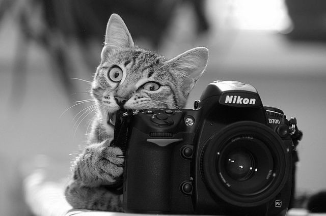 animal-photographe-7