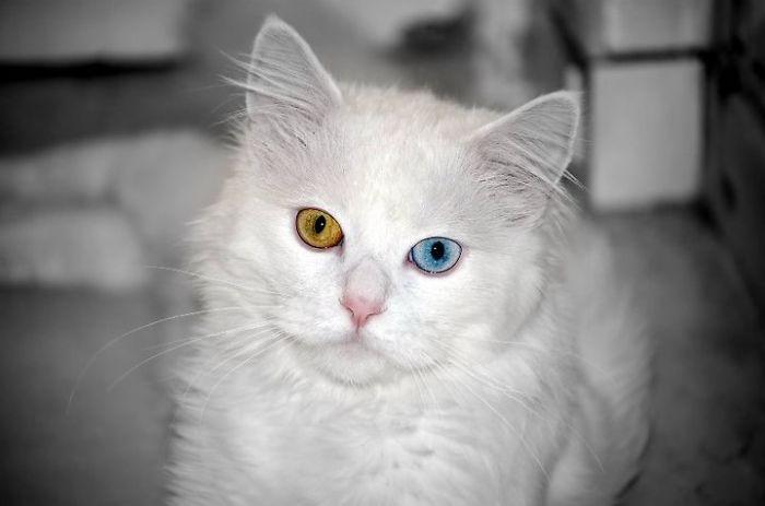 animalyeuxcolores1