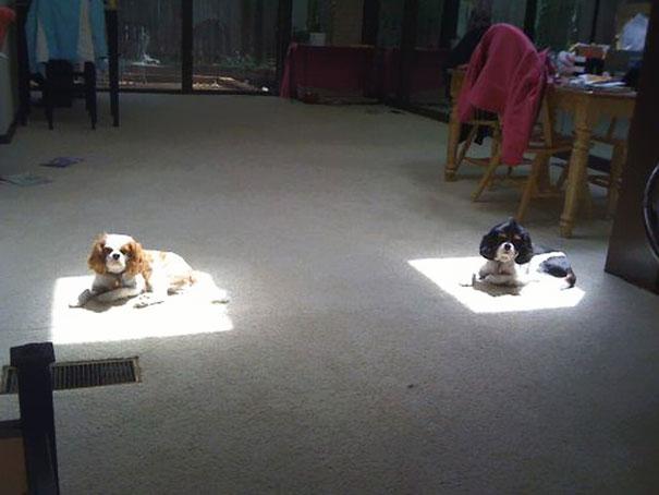 animaux chaleur 10