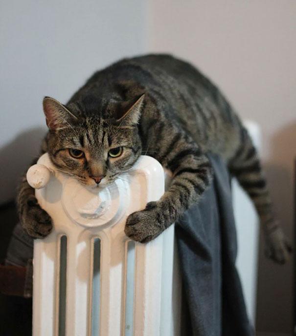 animaux chaleur 15
