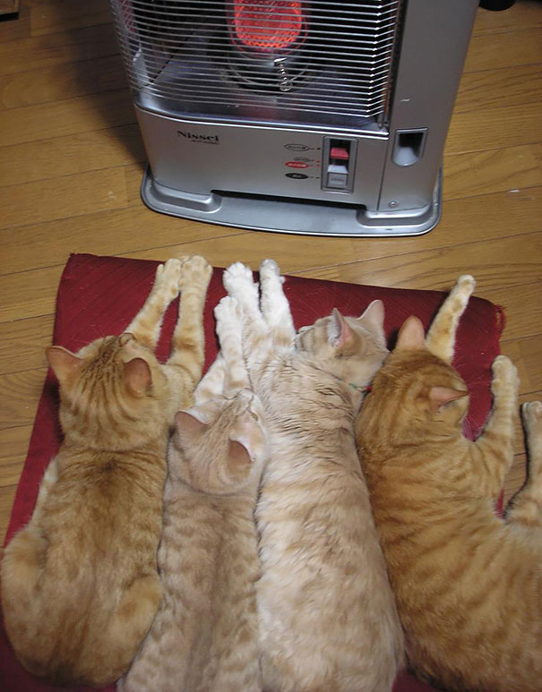 animaux chaleur 3