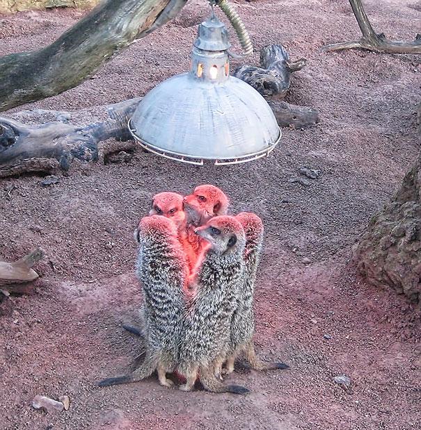 animaux chaleur 4