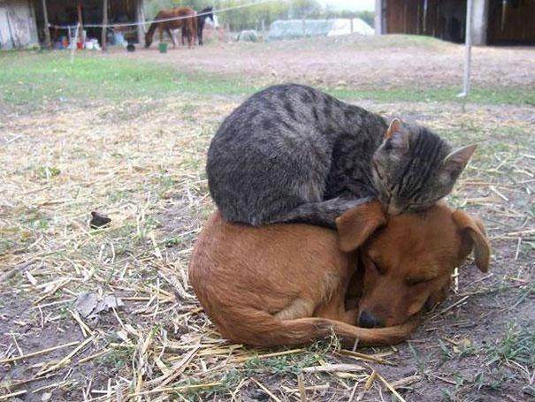 animaux chaleur 7
