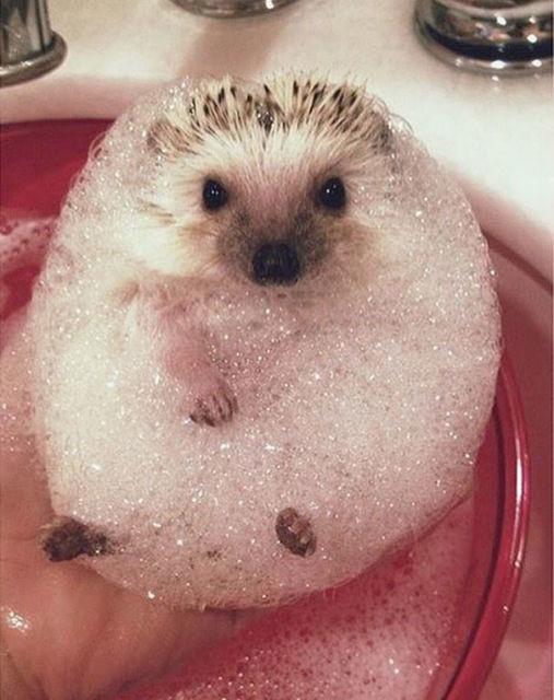 animaux-dans-le-bain-11
