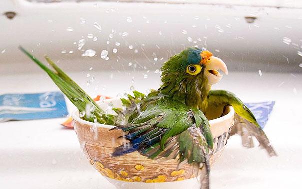 animaux-dans-le-bain-14
