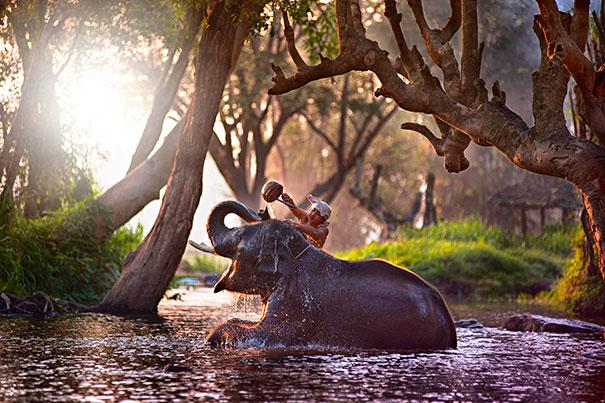 animaux-dans-le-bain-2