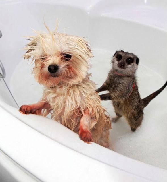 animaux-dans-le-bain-3