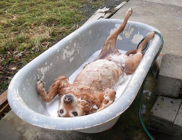 animaux-dans-le-bain-4