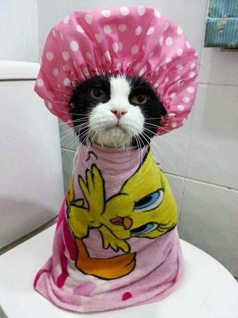 animaux-dans-le-bain-6