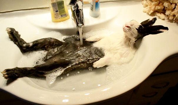animaux-dans-le-bain-9