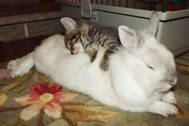 Ces 20 animaux totalement différents partagent leur sieste ensemble 1