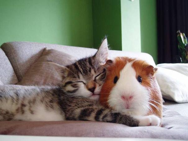 Ces 20 animaux totalement différents partagent leur sieste ensemble 10