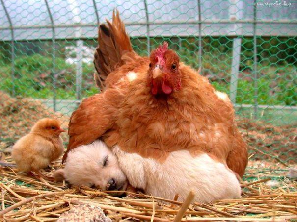 Ces 20 animaux totalement différents partagent leur sieste ensemble 12