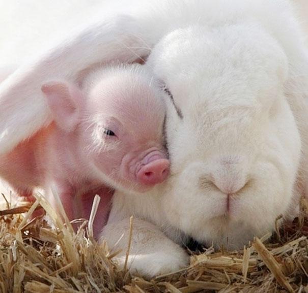 Ces 20 animaux totalement différents partagent leur sieste ensemble 13