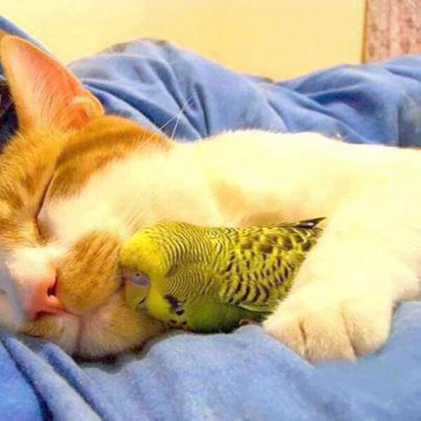 Ces 20 animaux totalement différents partagent leur sieste ensemble 14
