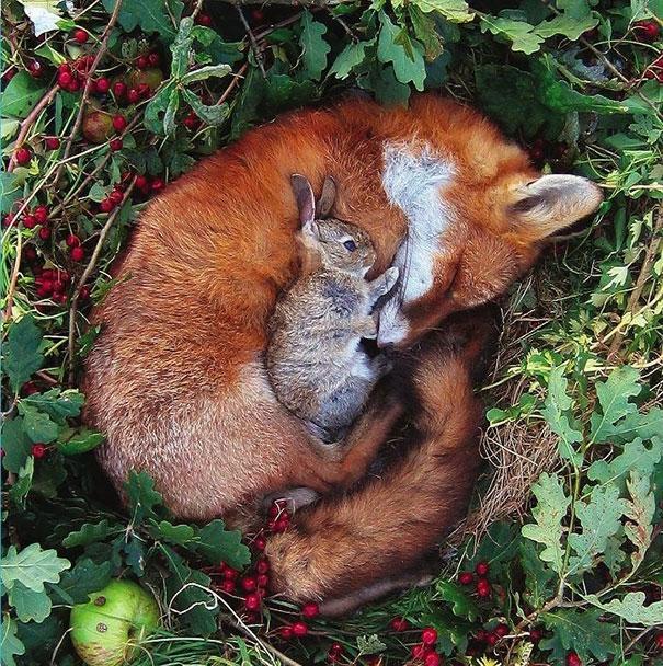 Ces 20 animaux totalement différents partagent leur sieste ensemble 15