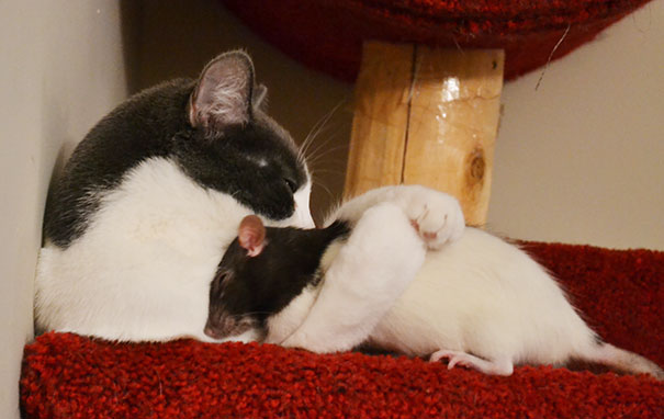 Ces 20 animaux totalement différents partagent leur sieste ensemble 17