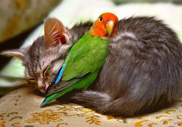 Ces 20 animaux totalement différents partagent leur sieste ensemble 18