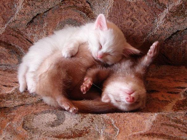 Ces 20 animaux totalement différents partagent leur sieste ensemble 19