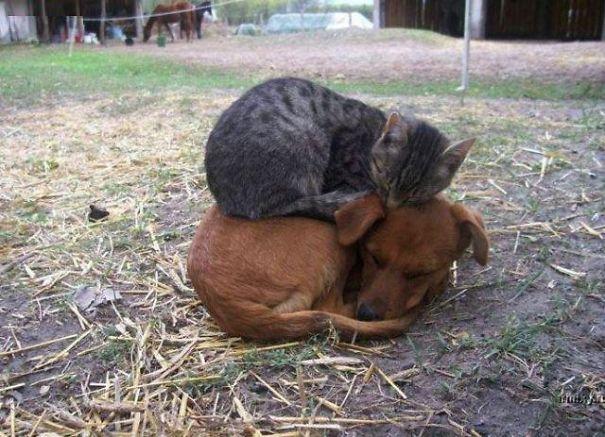 Ces 20 animaux totalement différents partagent leur sieste ensemble 2