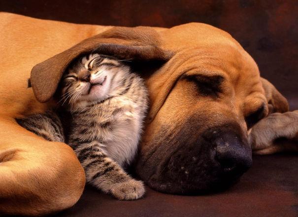 Ces 20 animaux totalement différents partagent leur sieste ensemble 20