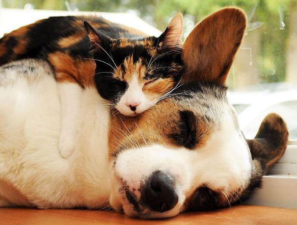 Ces 20 animaux totalement différents partagent leur sieste ensemble 4