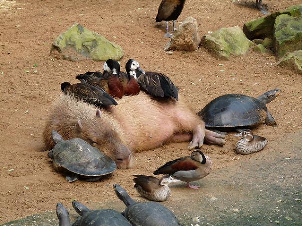 Ces 20 animaux totalement différents partagent leur sieste ensemble 5