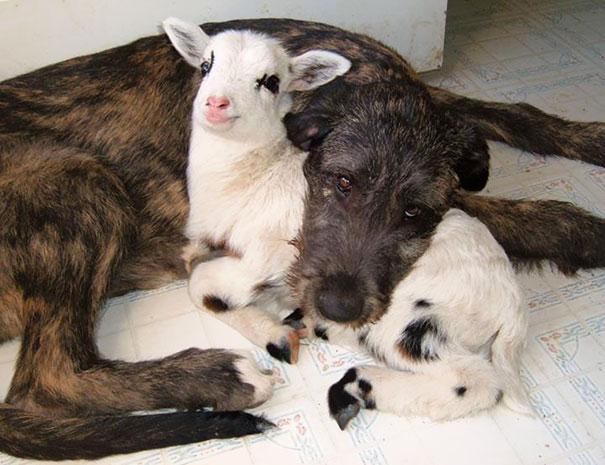 Ces 20 animaux totalement différents partagent leur sieste ensemble 6
