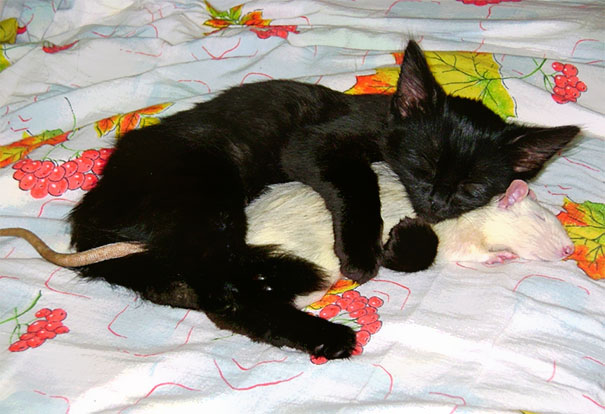 Ces 20 animaux totalement différents partagent leur sieste ensemble 9