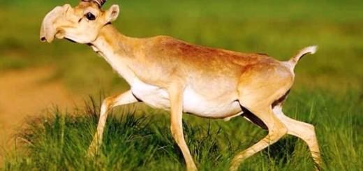 Mère Nature a quand-même le sens de l'humour... Voilà 25 animaux BIZARRES 24