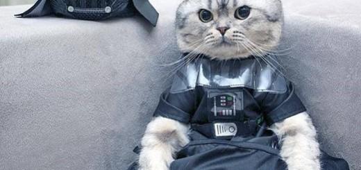 Des animaux complètement FANS de la saga Star Wars 18