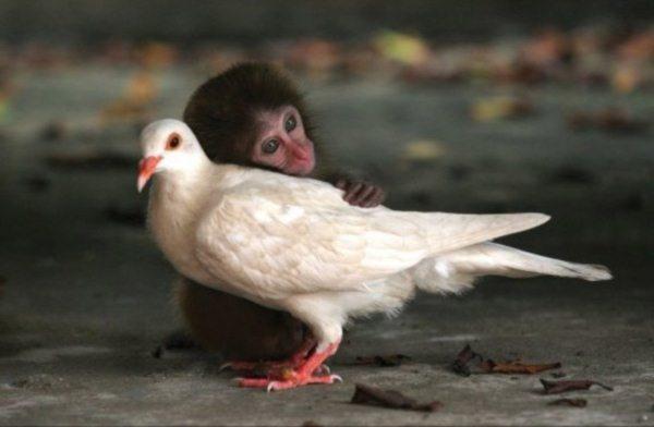 GE-NIAL : ces animaux sont très différents mais s'aiment très fort. 4