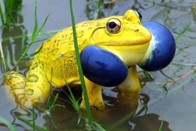 SUPERBE : 20 animaux aux couleurs totalement impropables 11