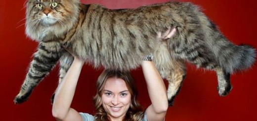 SURPRENANT : ces 20 animaux géants sont bien REELS ! 14