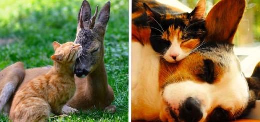 Ces 20 animaux totalement différents partagent leur sieste ensemble 21