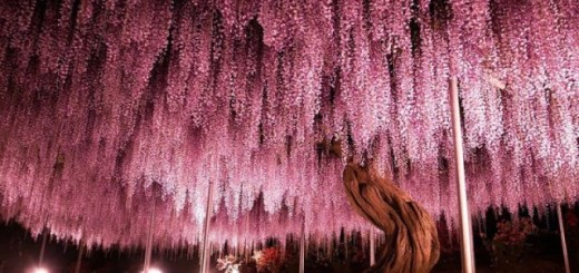 Les plus beaux arbres du Monde 8