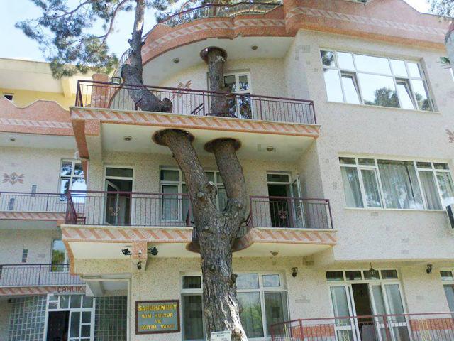 architecture-autour-des-arbres-1