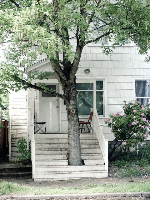 architecture-autour-des-arbres-2
