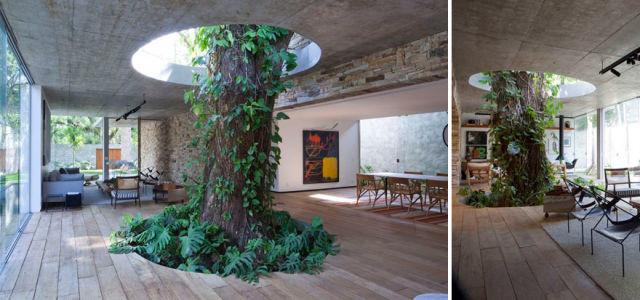 architecture-autour-des-arbres-4
