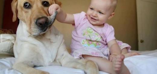 De gros chiens avec de tous petits bébés 7