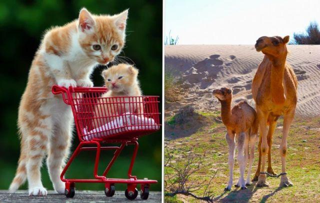 34 magnifiques photos d'animaux avec leurs petits 35