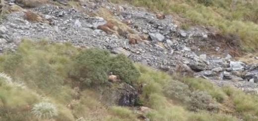Voilà des animaux ayant le sens du camouflage... 1