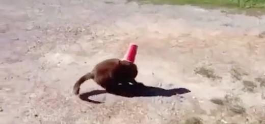 INCROYABLE : Un chien aide un chat.